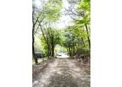대둔산 젠틀글램핑장은 숲길로 되어있어 산책에 최적입니다. 젠틀글램핑장에에서 힐링하세요